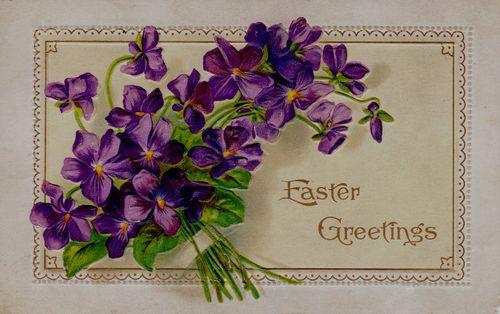 Easter violets152