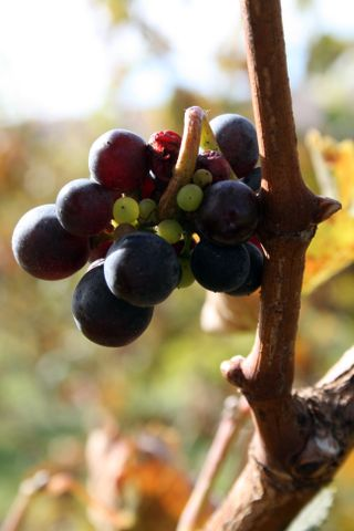 Apple Picking and Winery 137