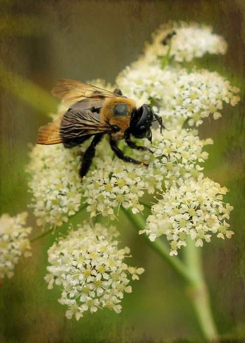 Bee copy
