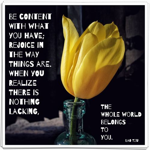 Tulip with quote
