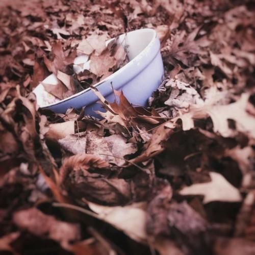 Bowl in leaves
